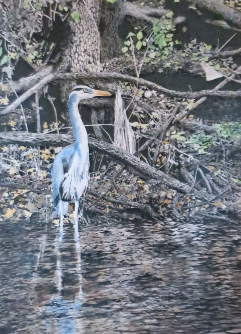 painting - Blue Heron by Ed McCarty